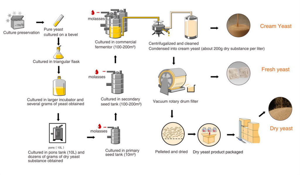 instant yeast manufacturing process
